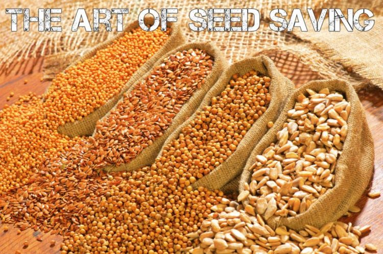 Seed Saving and Seed Storage For Survival